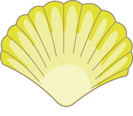 Shell clipart Pictures Graphics sea Art yellow