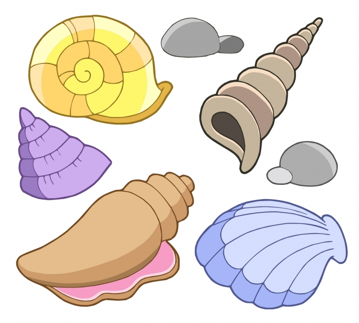 Shell clipart Seashell Free Seashell Pictures cliparts