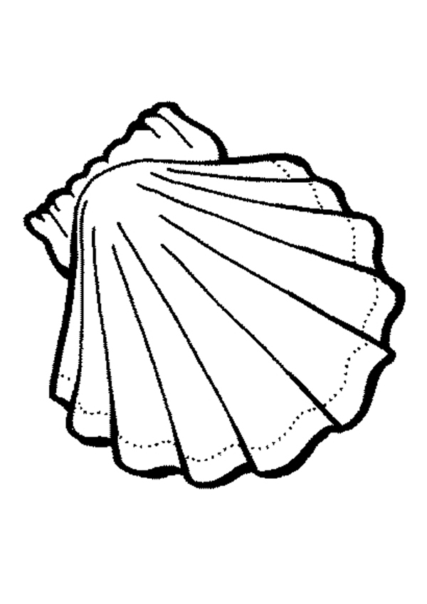 Shell clipart colouring page #5