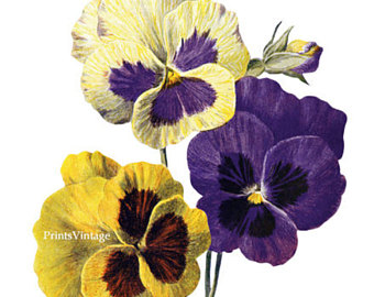 Shell clipart pansy #15
