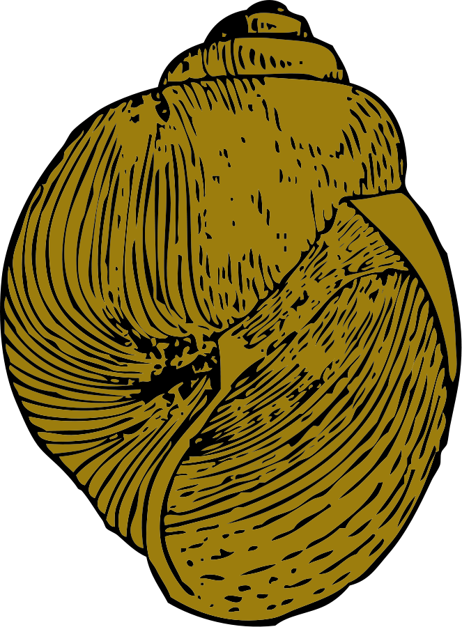 Shell clipart yellow And Others Cliparts Scallop Shell