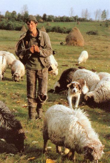Shepherd Boy clipart sheep herder Shepherd best on about Shepherds