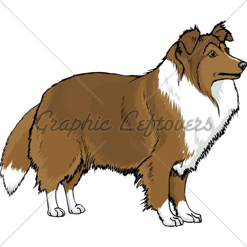 Shetland Sheepdog clipart Sheepdog Sheltie Aka The ·
