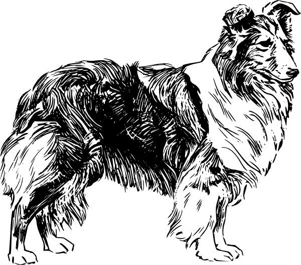 Shetland Sheepdog clipart Art Free Shetland Sheepdog