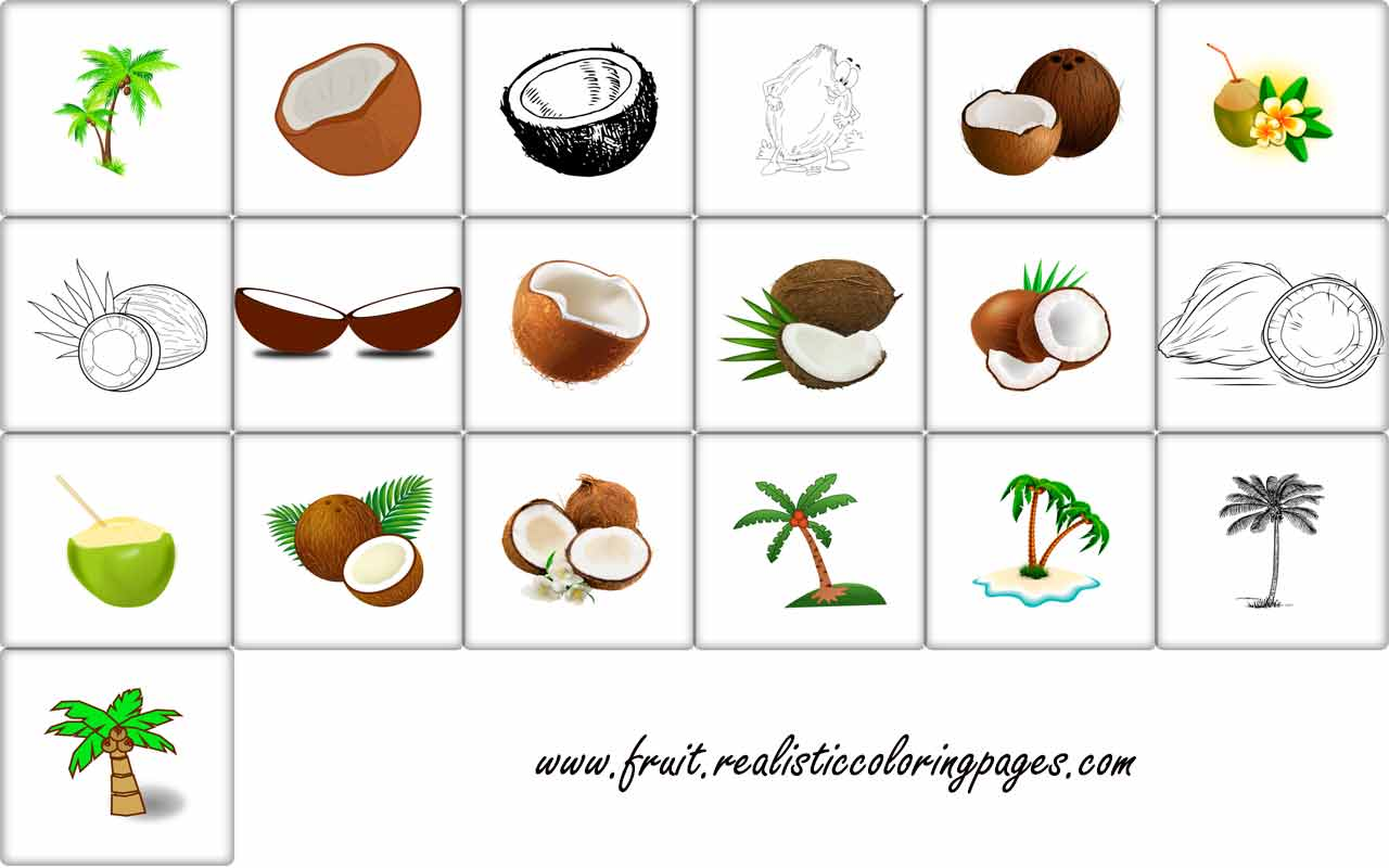 Shocking clipart right Pictures coconut 19 A Clipart