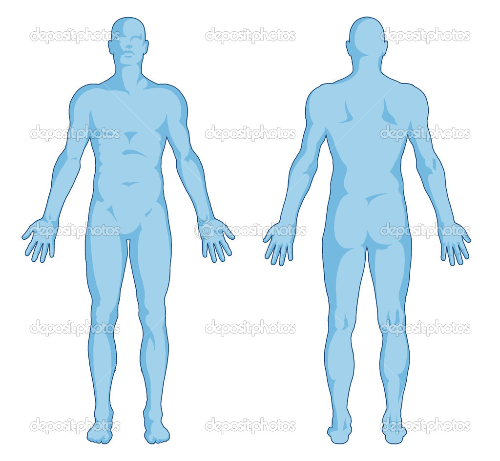 Shoulder clipart body outline Clipart Body Images Free Human