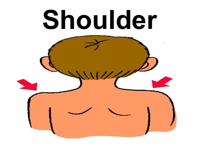 Shoulder clipart body part Shoulder; Body 22 23 vocabulary