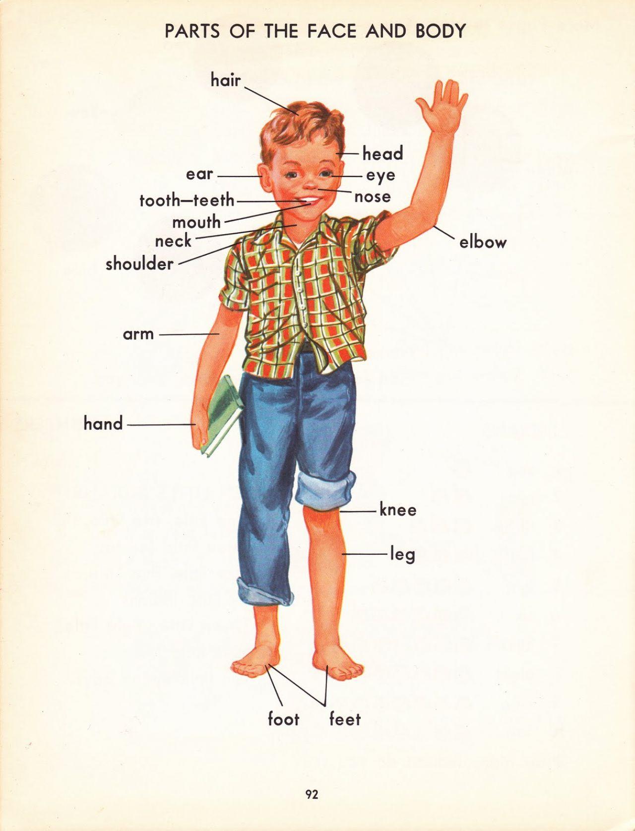 Shoulder clipart body part Parts Kids Clip Ideas Body
