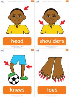 Shoulder clipart body part The flashcards Knees Simple version