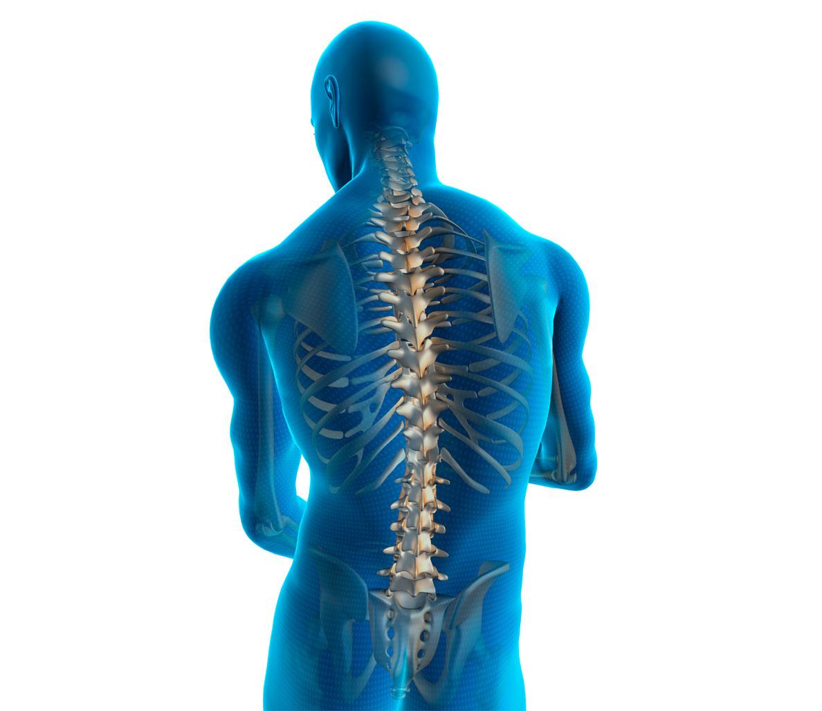 Shoulder clipart human back Injury Prevention Ways Pain Back