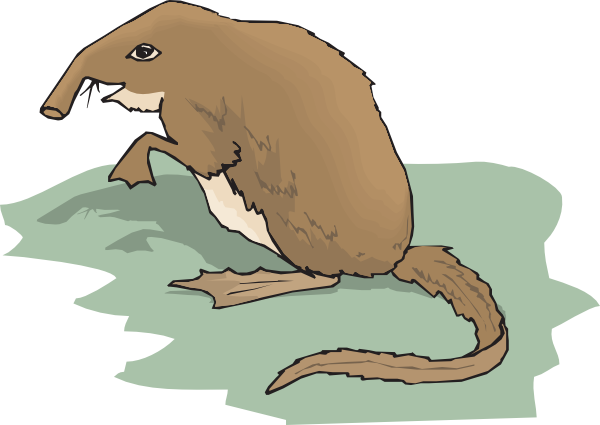 Shrew clipart At Clip vector Art Nosed