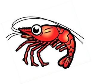 Shrimp clipart Shrimp Clipart Free shrimp