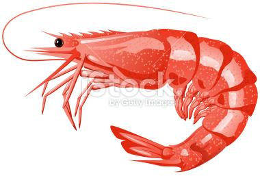 Shrimp clipart #10