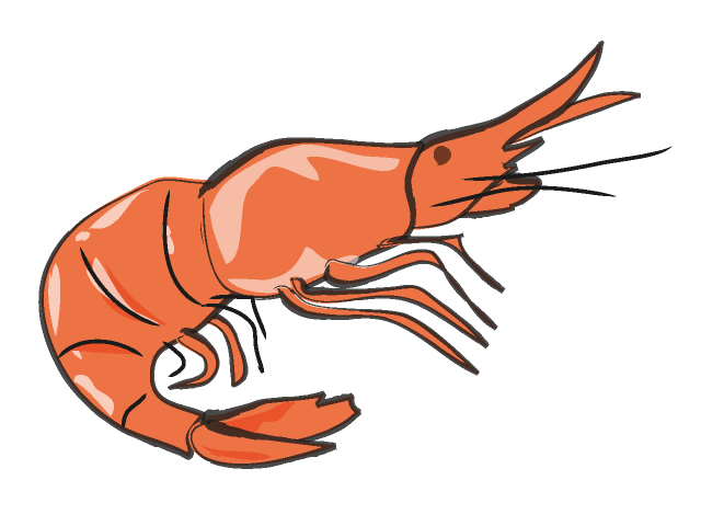 Crustacean clipart seafood Pictures Shrimp Free kid shrimp