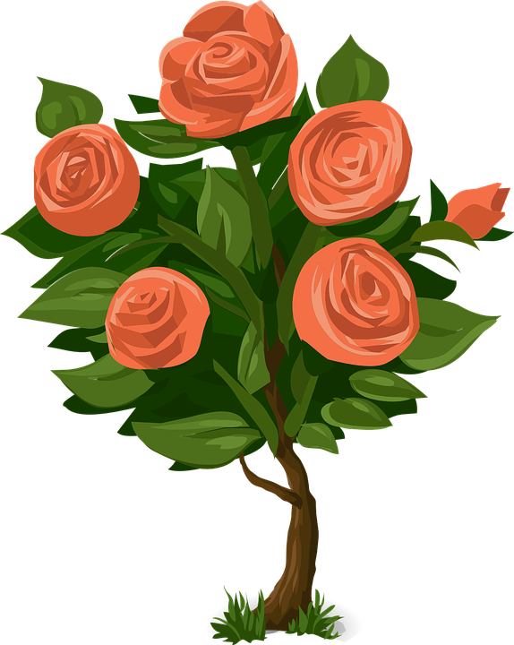 Beautiful clipart rose plant Roser Bush Bush Blomstermotiver more!