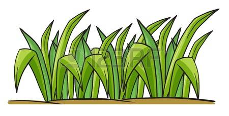 Shrub clipart grass Stock Cliparts collection 12 clipart