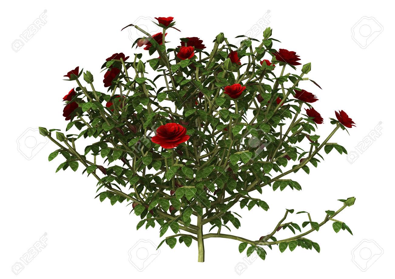 Shrub clipart rose plant Clip Cliparts Cliparts Zone art