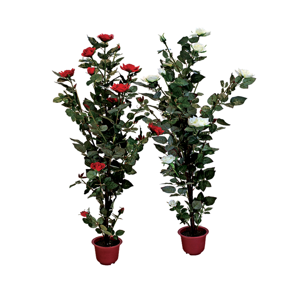 Rose Bush clipart shrub plan #3