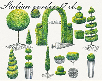 Shrub clipart topiary Clipart Topiary Painted art Hand