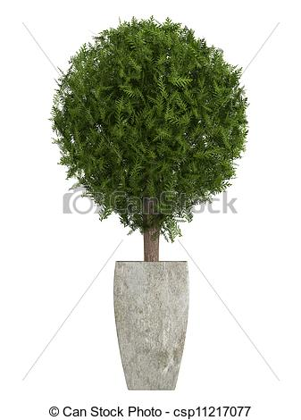 Shrub clipart topiary Cypress Illustrations cypress a Evergreen