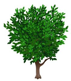 Plant clipart transparent Picture Transparent PNG Planner