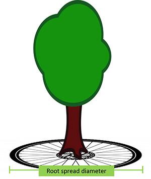 Shrub clipart tree  Watering established shrubs and
