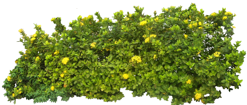 Hedges clipart shrubbery Clipart ClipartBarn #22538 clipartfest bushes