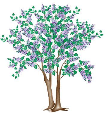 Shrub clipart two tree Best Tree Lilac 2 Shrub