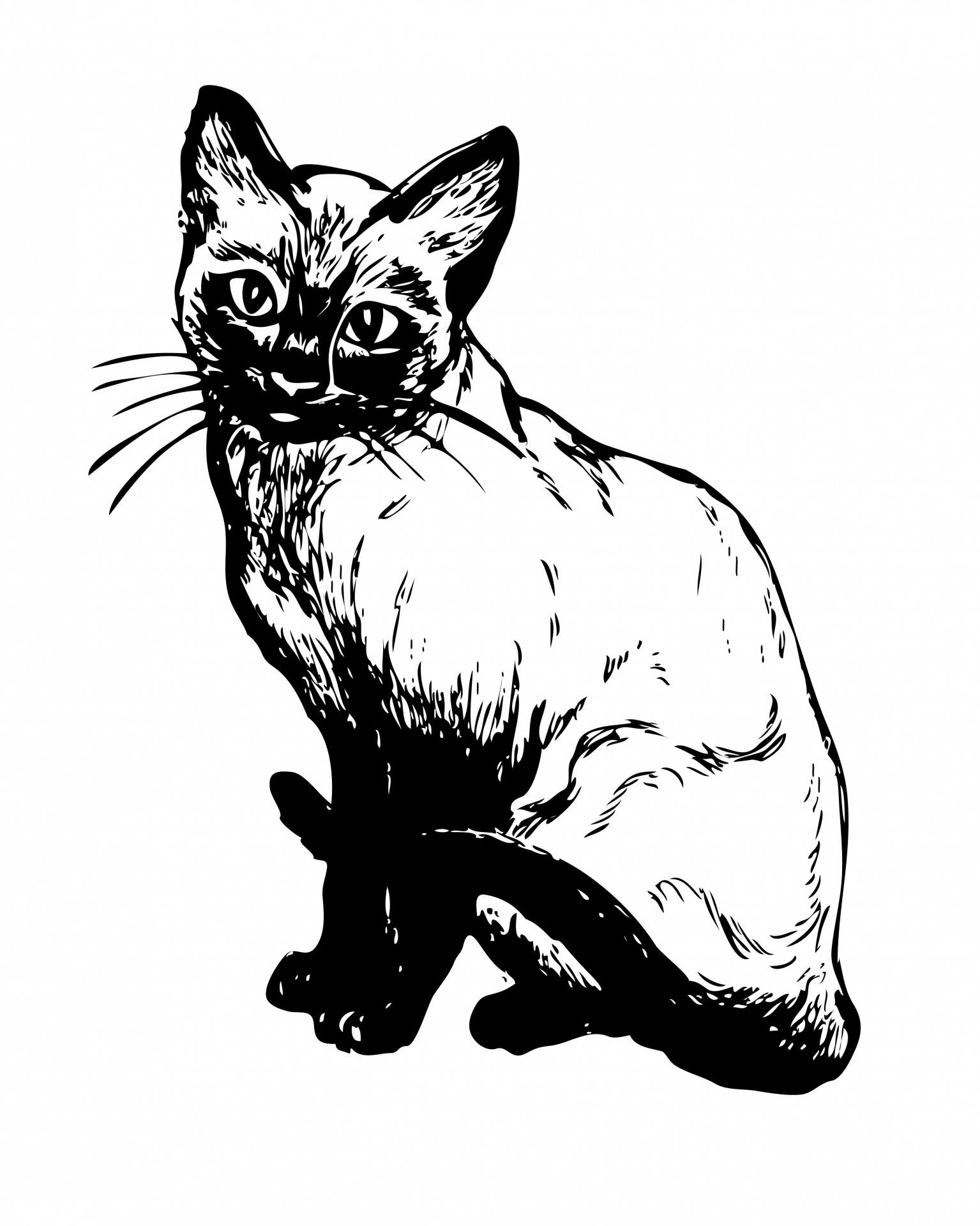 Siamese Cat clipart Siamese Public Cat Clipart Clipart