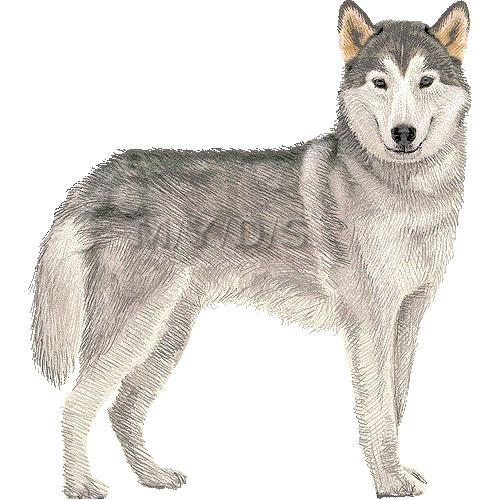 Siberian Husky clipart #11