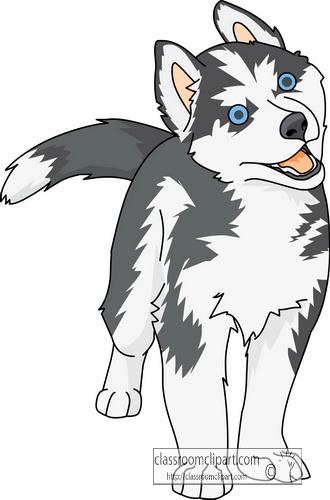 Siberian Husky clipart #12