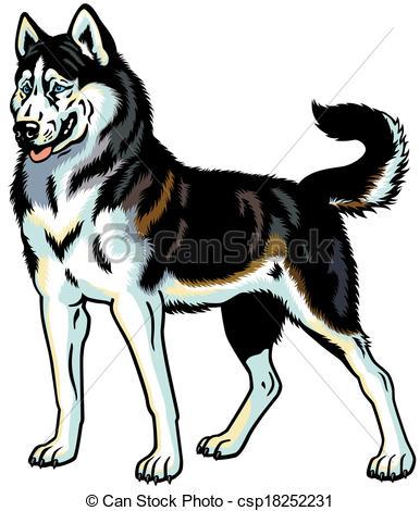 Siberian Husky clipart #2