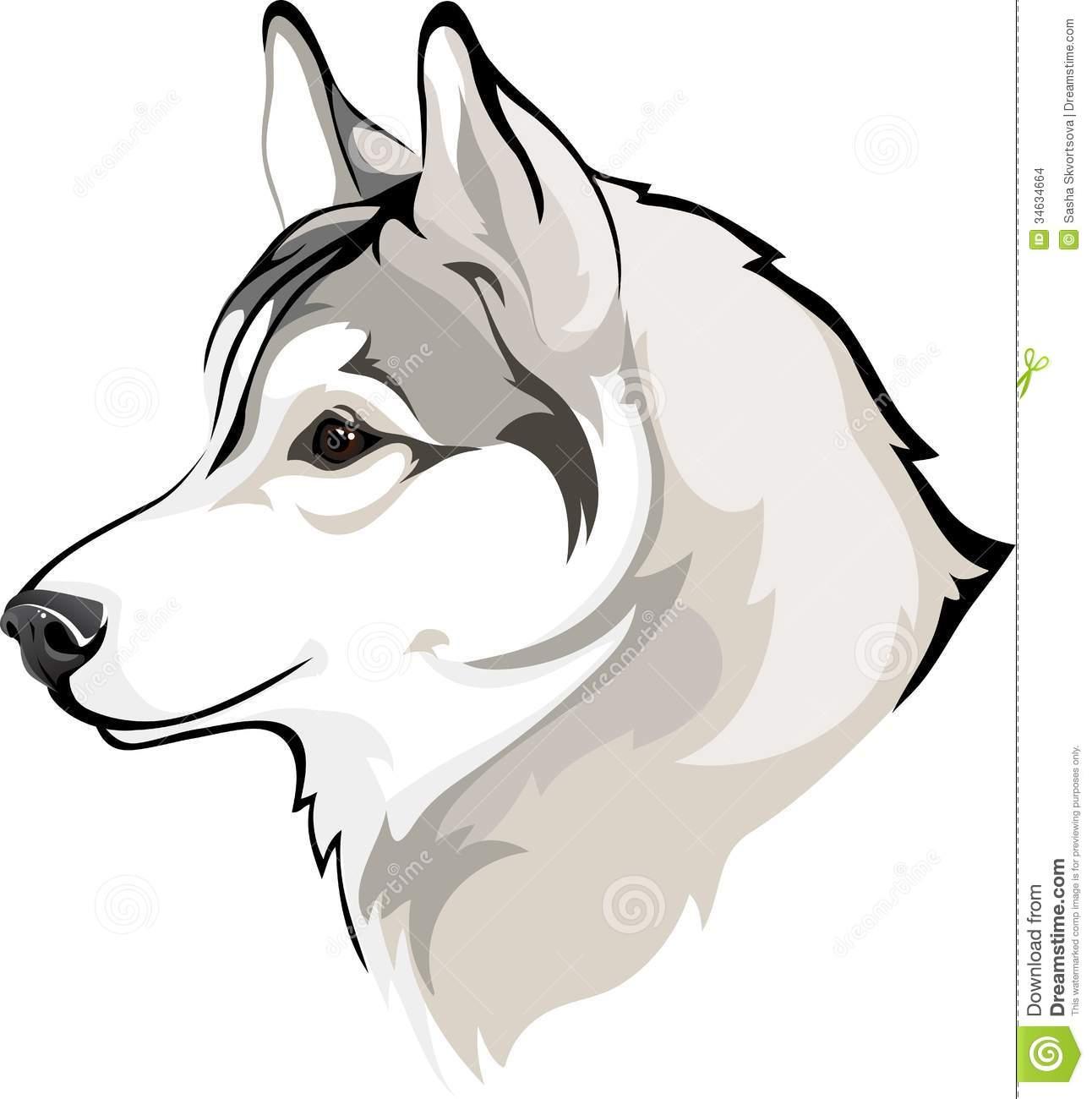 Siberian Husky clipart #7