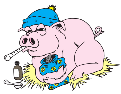 Sick clipart hyperthermia Has fever mini What pig