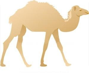 Camel clipart silk road Route Travel ROAD & Guide