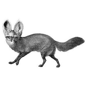 Silver Fox clipart Images a Clipart Free eared
