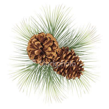 Pine Cone clipart border Art Tree Illustration Art 98