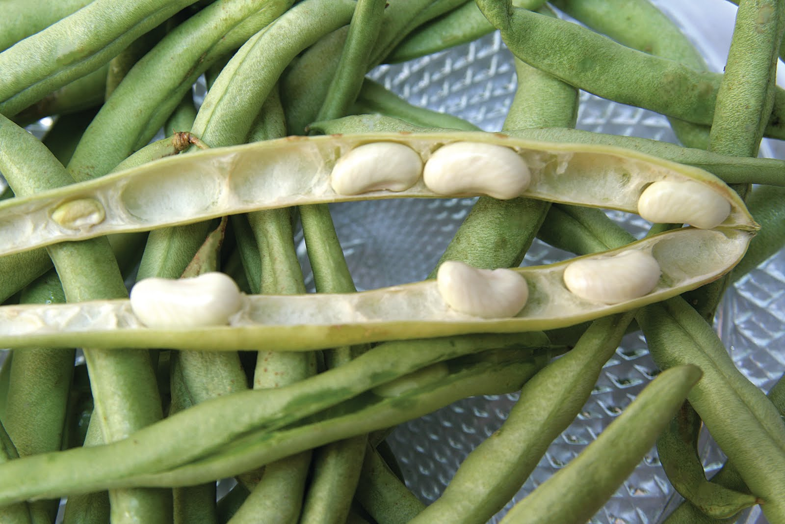 Single clipart green bean Vegetable beans Search Google Google