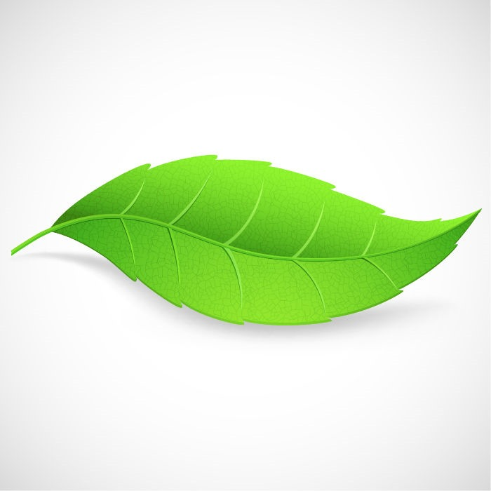 Single clipart green leave Art Illustration Green on Free