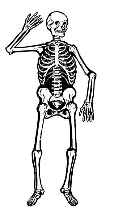 Skeleton clipart Clip images art clipartix Free