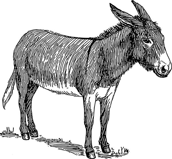 Skeleton clipart donkey Donkey Clker on com royalty