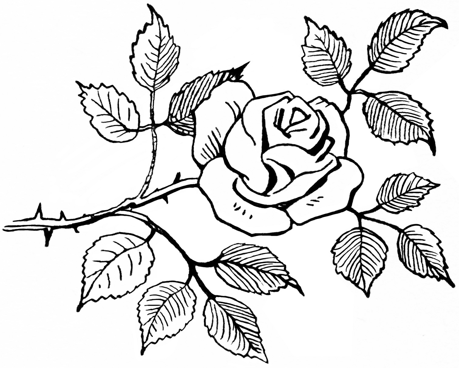Sketch clipart Of cliparts Rose Sketch Clipart