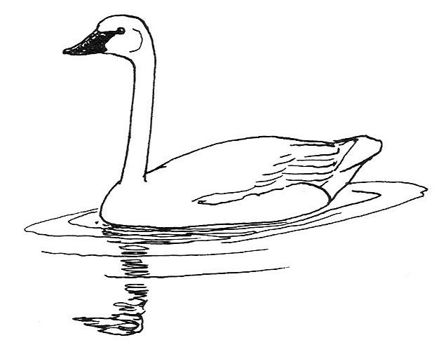 Sketch clipart Swan clipart Clipartix clipart Sketch