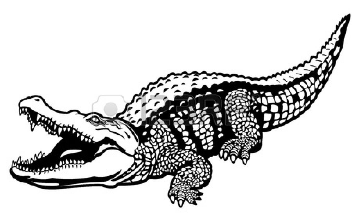 Alligator clipart sketch Images White Clipart Panda crocodile%20black%20and%20white