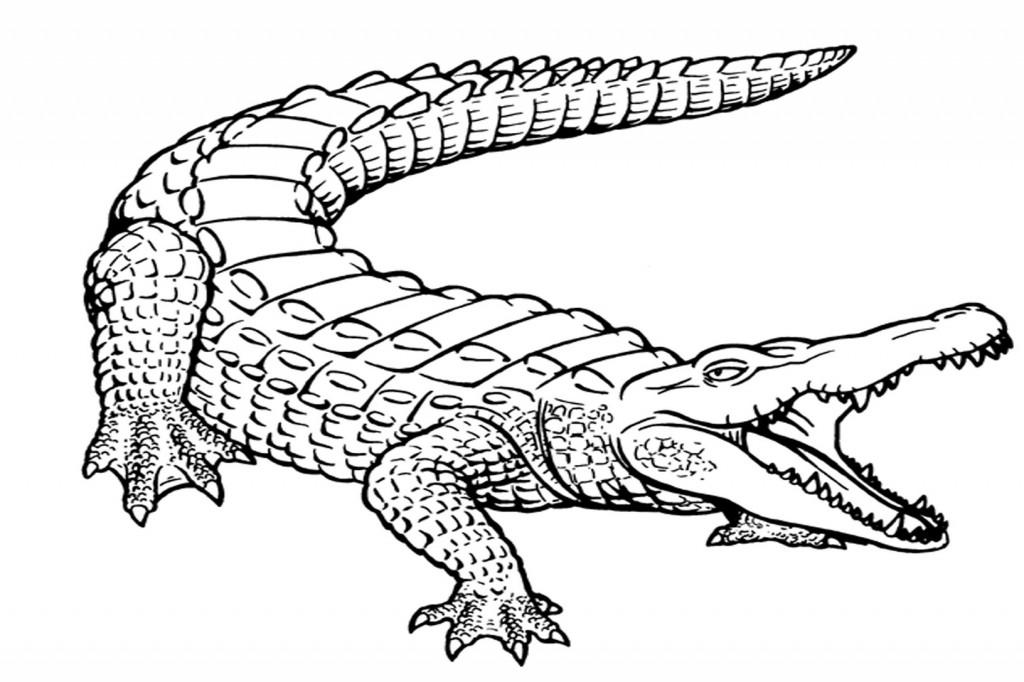 Monochrome clipart alligator #5