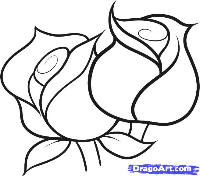 Drawn rose bush step by step flower Flowers for drawing How White
