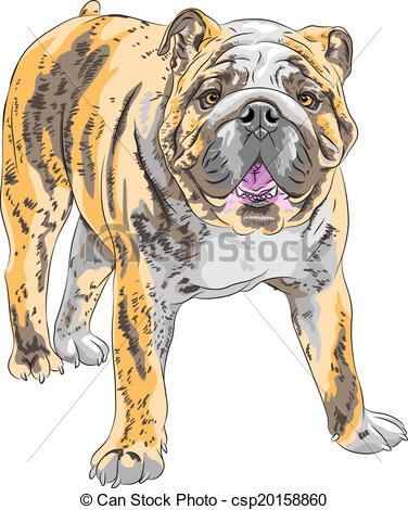 Sketch clipart british bulldog English  Art breed sketch