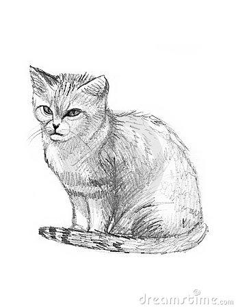 Sketch clipart cat Sand clipart Sand clipart Cat