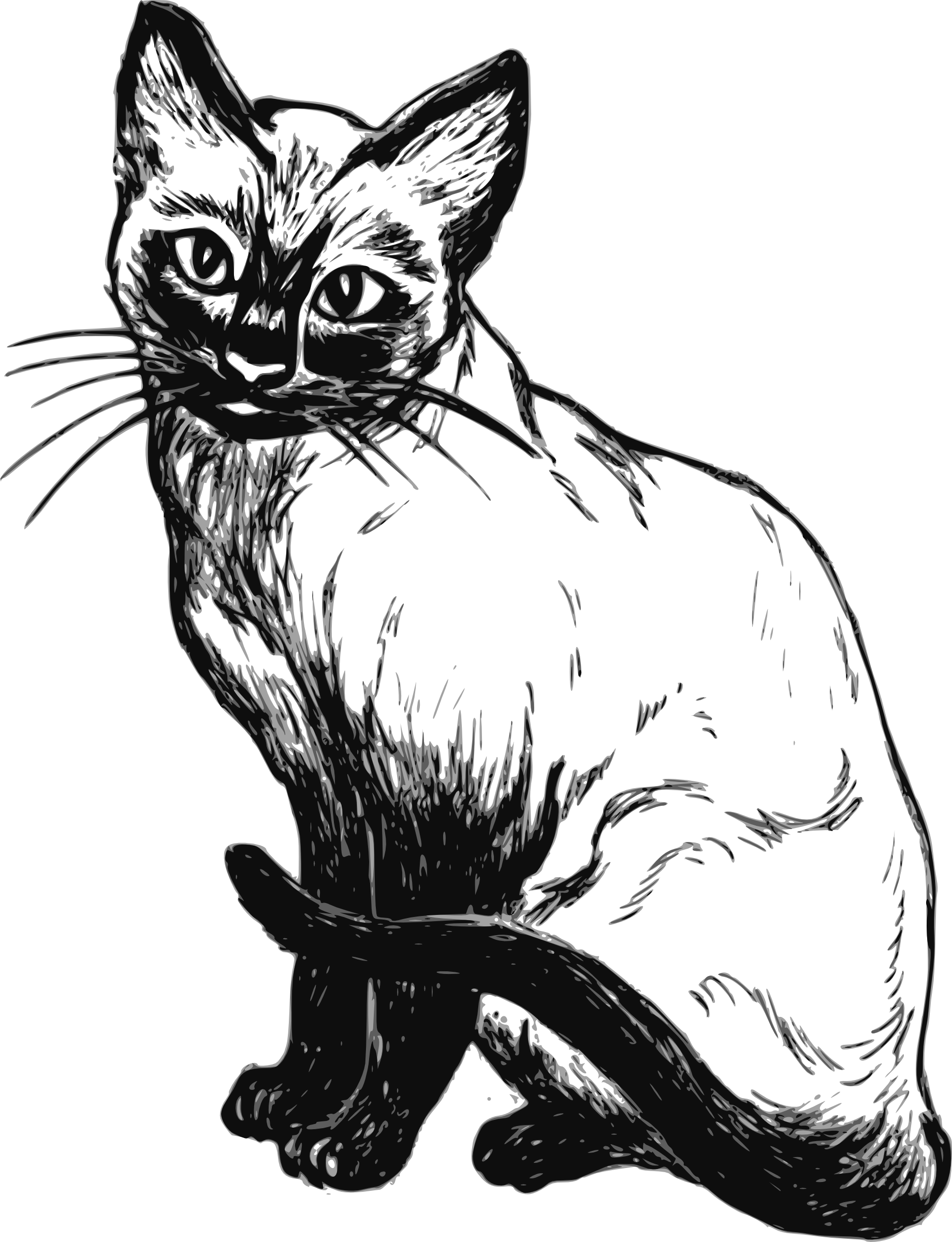 Sketch clipart cat Com pictures images Cliparting art