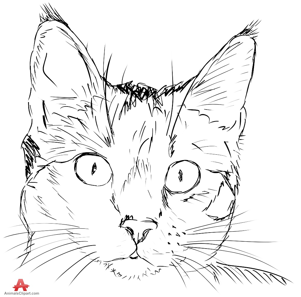 Sketch clipart cat Download Cat Clipart Design of